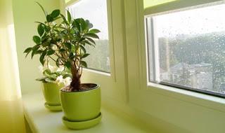 Λίπασμα για φυτά εσωτερικού χώρου