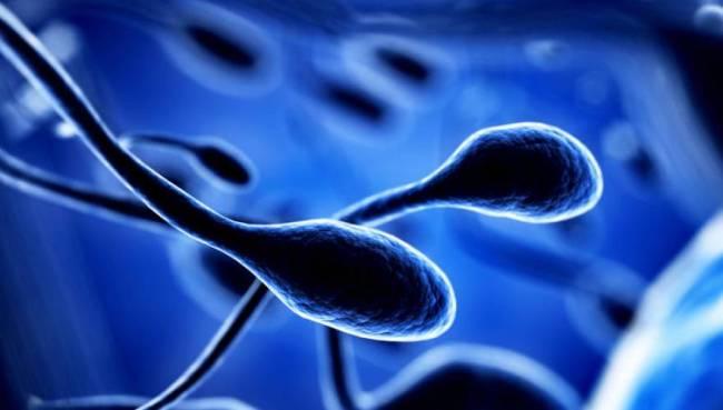 spermatozwaria_2